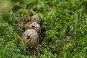 Fungi That Cause Dust
