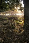 Sun Beams Shining Through Trees In Forest On Foggy Autumn Fall Sunrise Landscape