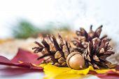 Pine Cone, Acorn And Autumn Birch Leaf