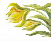 Exotic flowers  isolated on white. Oil painting