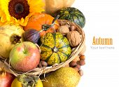 Autumn Abundance