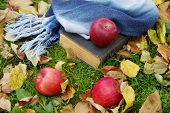 The Old Book And Apples Among Autumn Foliage
