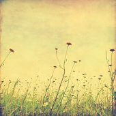 Daisy field and blue sky in grunge style.