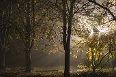 Misty autumn light