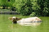 West Lake's Legendary Golden Bull