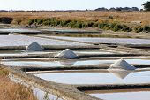 Salt marshes of Noirmoutier