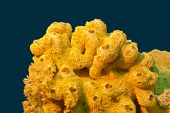 Coral Reef With Great Yellow Sea Sponge At The Bottom Of Tropical Sea