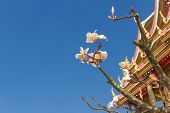 plumeria flower with the temple background