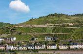 Rhine Valley, Germane