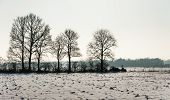 Bare Trees In A Snowy Landscape