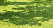 Tree Shadow On Green Grass
