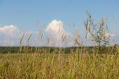 image of tall grass  - tall grass on a sunny summer meadow - JPG
