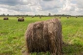Hay On Meadow
