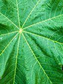 Green Leaf In Raindrops