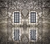 stock photo of creeper  - windows on a wall filled with creepers reflected on water - JPG