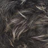 Gray fur texture