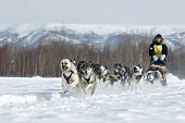 Traditional Kamchatka Sled Dog Race