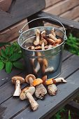 stock photo of edible  - wild edible orange and brown cap boletus mushrooms on wooden bench