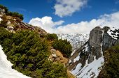 foto of dwarf  - View from Loser peak over dwarf pine trees steep rocky wall and summits covered with snow Dead Mountains  - JPG