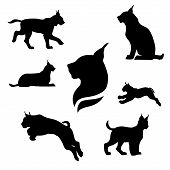 picture of animal silhouette  - Lynx set of black silhouettes - JPG