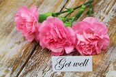 stock photo of wishing-well  - Get well card with pink carnation flowers - JPG