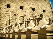 picture of templar  - Sphinxes avenue detail at the entrance of the Karnak Templar complex  - JPG