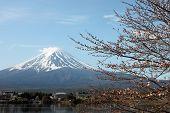 picture of mount fuji  - Mount Fuji and sakura not blossom at Kawaguchiko lake side - JPG