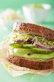 image of alfalfa  - healthy rye sandwich with avocado cucumber alfalfa sprouts - JPG