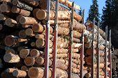 Wood Logs On Truck Trailer