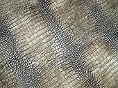 White Crocodile Skin Texture, Danger Closeup