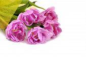 Tupil Bouquet