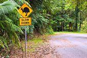 Cassowary Road Warning Sign In Asutralia