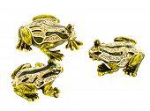 Three frogs talking