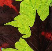 Cu Leaf Study