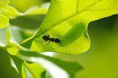Ant Shepherd