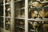 Cupboard Full Of Old Human Skulls