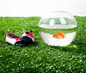 little aquarium and kid's slipper