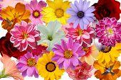 floral escapade