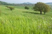 stock photo of golan-heights  - spring vegetation in the Golan heights - JPG