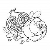 Vector Branch With Outline Pomegranate Whole Fruit And Ornate Leaf In Black Isolated On White Backgr poster