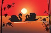 illustration with two swan silhouettes in bamboo bush