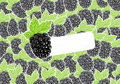 Vector blackberry with group of berries on background
