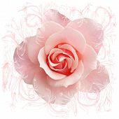 abstract sweet pink rose and hand drawn paths