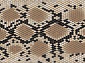 Lozenge Pattern Snake Skin