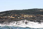Tofino Seals