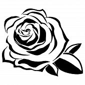 Black And White Blooming Rose. Hand Drawn Rose Flower. Vector Of A Beautiful Rose. Flower Bud Of A R poster