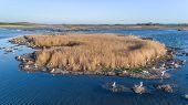 Colony Of Seagulls In Danube Delta, Romania poster