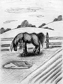 Grazes Horse In Roundup