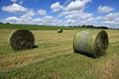 Freshly rolled bales of hay ready to be picked up