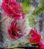 Ice sculpture with red roses poster
